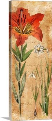 Calligraphy Botanical Lily