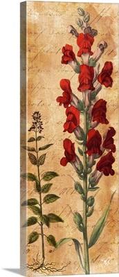 Calligraphy Botanical Snapdragon