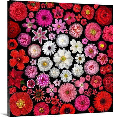 Flower Mandalas Red - White