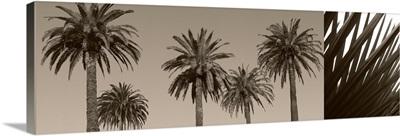 Palm Montage
