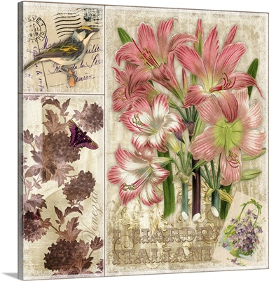 Pink Botanical Lily
