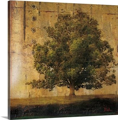 Aged Tree I