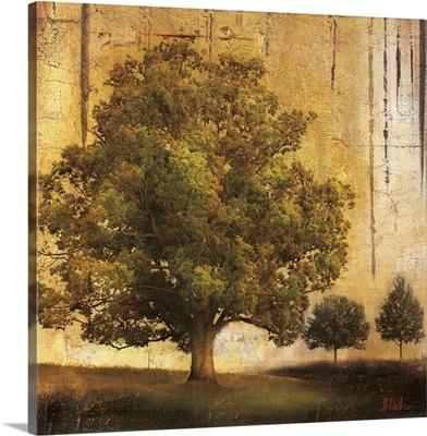 Aged Tree II