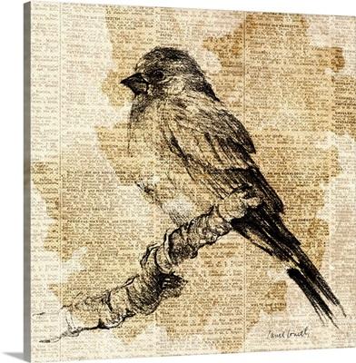 Bird Study I