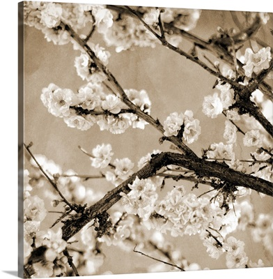 Black and White Blossoms II