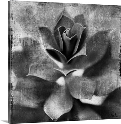 Black and White Succulent Border I