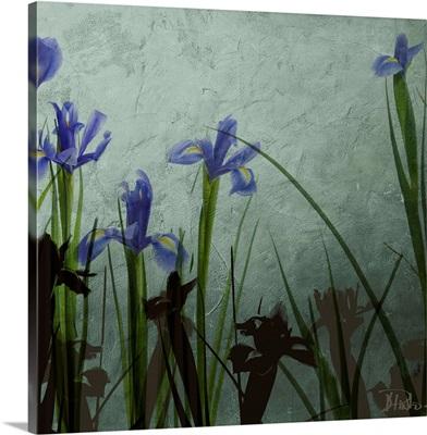 Blue Irises II
