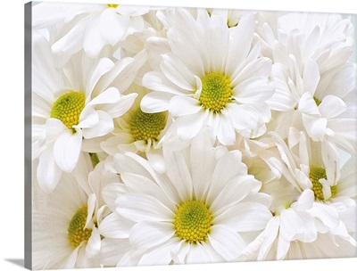 Bunch of White Daisies