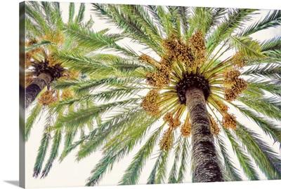 Chic Palms I