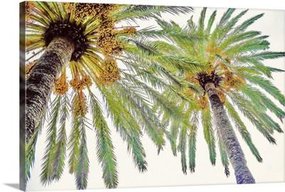Chic Palms II