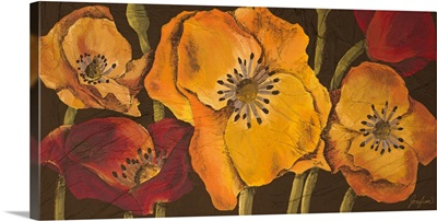 Dazzling Poppies II
