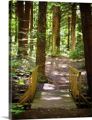 Forest Park Path