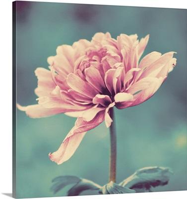 Gorgeous Pink