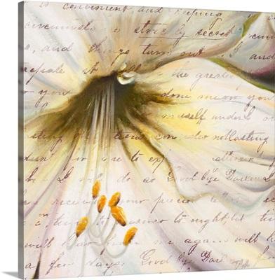 Lily Script II