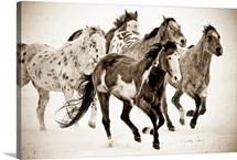 Painted Horses Run