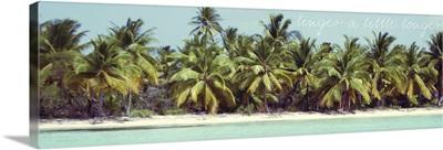 Palms Galore II