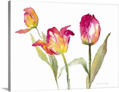 Pink Hues Tulips