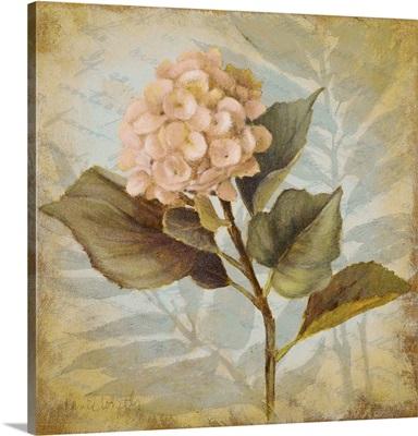 Pink Hydrangea Portrait