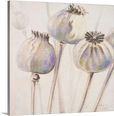 Poppy Seeds I