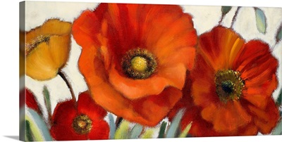 Poppy Splendor I
