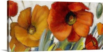 Poppy Splendor II