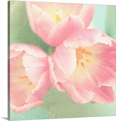 Resplendent Blossoms