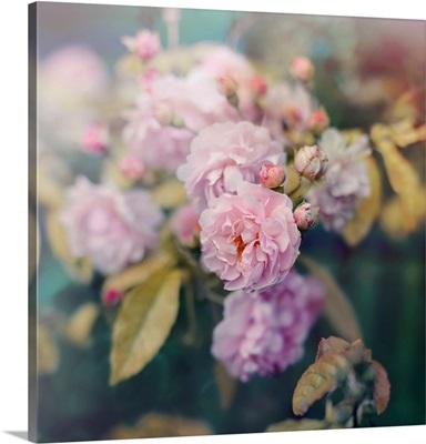 Season of Blossoms