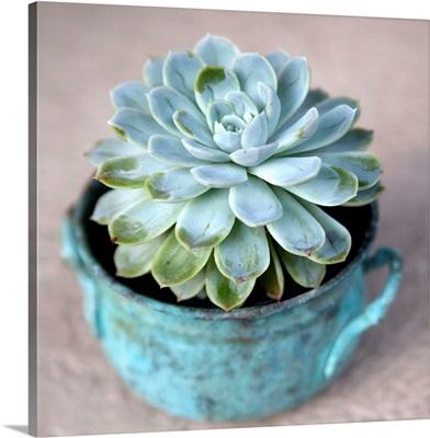 The Little Succulent