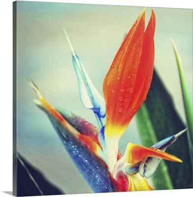 Tropical Floral II