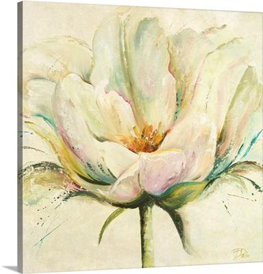 White Double Tulips II
