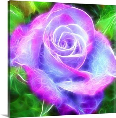 Rose Of Magic