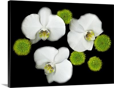 White Orchids Original Color Photography