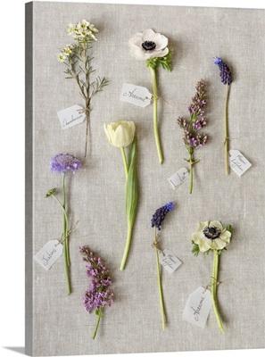 Botanical Flowers II