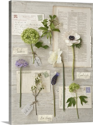 Botanical Flowers III