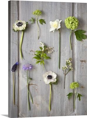 Botanical Flowers IV