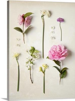 Botanical Flowers IX