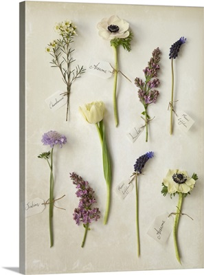 Botanical Flowers VI