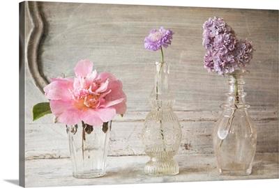 Botanical Flowers VIII