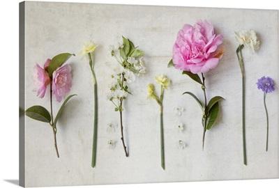Botanical Flowers X