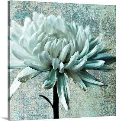 Chrysanthemum Texture