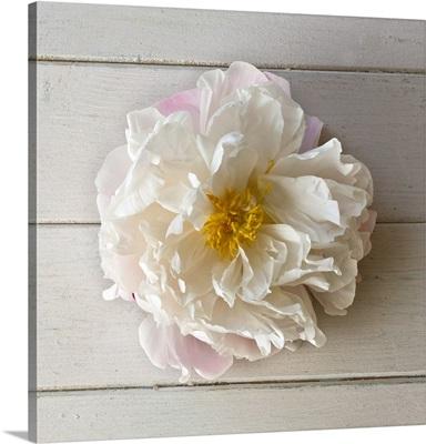Flower On Weatherboard