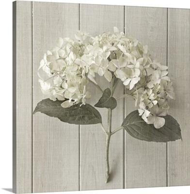 Hydrangea on Wood