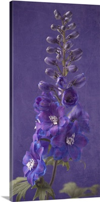 Purple Foxgloves II