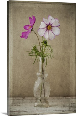 Two Cosmos Vase