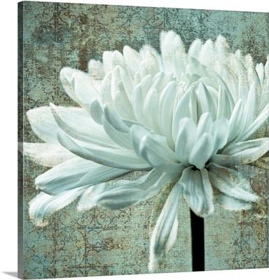White Chrysanthemum Texture