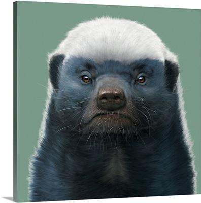 Honey Badger Portrait