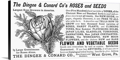 Advertisement For Dingee and Conrad Company's Roses And Seeds, 1889