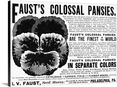 Advertisement For Faust's Pansies, 1889