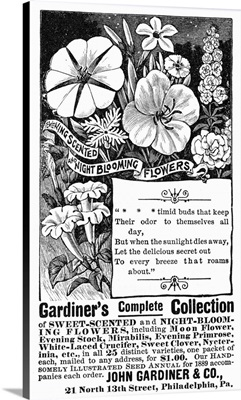 Advertisement For Gardiner's Sweet-Scented And Night-Blooming Flowers, 1889