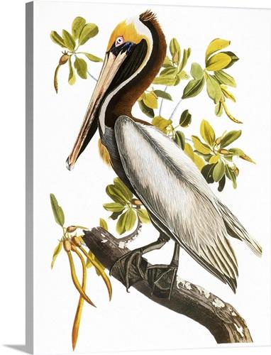 Audubon: Pelican Wall Art, Canvas Prints, Framed Prints, Wall Peels ...